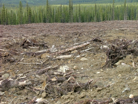 Boreal Forest Destruction