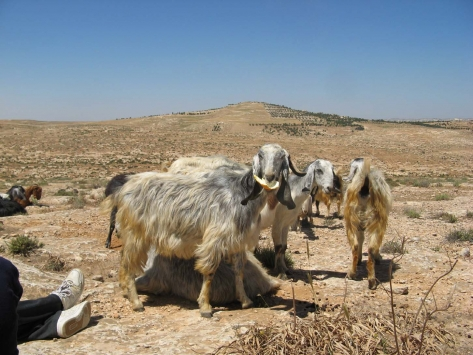 South Hebron Hills
